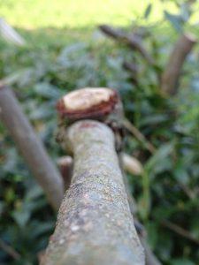 Leistungsspektrum Baumschnitt
