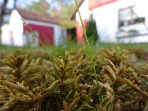 Leistungsspektrum Rasen vertikutieren und Rasen mähen